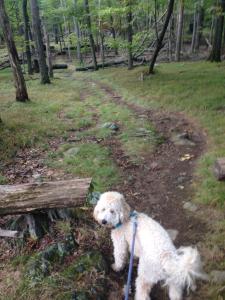 dr-eeks-barnaby-wooded-adventure2